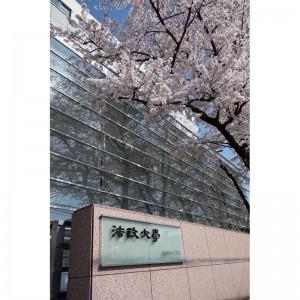 正門脇の桜
